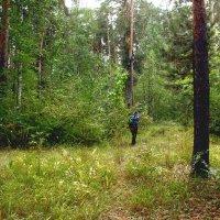 Лесные прогулки :: Александр Садовский
