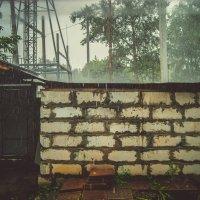 Дождь, ну и погодка... Новосибирск.. :: Света Кондрашова