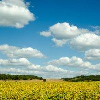По дороге с облаками-2 :: Ольга Савотина