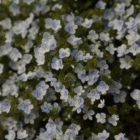Цветочный хоровод-490. :: Руслан Грицунь