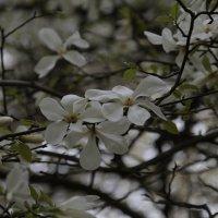 Цветочный хоровод-488. :: Руслан Грицунь
