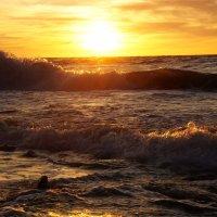 золотой закат Балтики :: Ксения