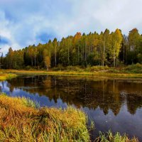 зарастающий пруд :: gribushko грибушко Николай