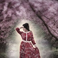 Сакура цветёт :: Елена Ушакова