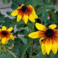 Городские цветы в августе... :: Тамара (st.tamara)