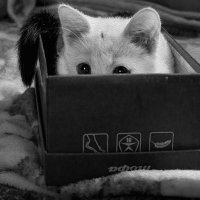 Шопинг по-кошачьему :: Елена Ел
