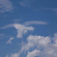 Птица в небесах :: Ольга