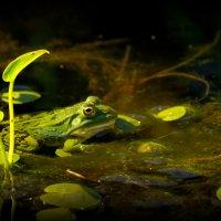 Зеленая красотка :: НаталиКа
