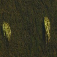 река Луга заплетает косички своим течением..... :: Михаил Жуковский