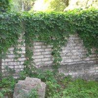 Стена :: Неля