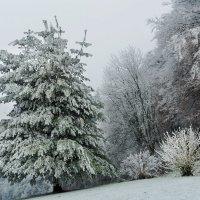 зима украсила :: Elena Wymann