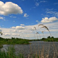 Лето, лето... :: Евгений Юрков