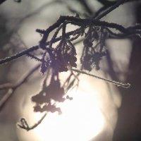 Зима :: Аполлинария Иванникова
