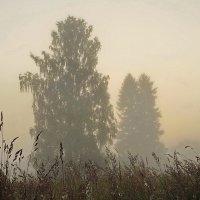 Дерево и туман. :: Владимир Гилясев