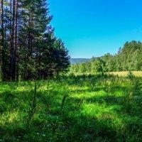 На лесной поляне. :: Rafael