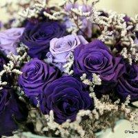 розы цвета ночи :: Олег Лукьянов