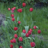 Цветочный хоровод-499. :: Руслан Грицунь