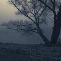 Утки дерево и голубь :: Alexander Asedach