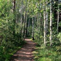 Лесными тропинками..... :: Валентина Жукова