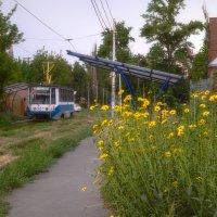 Цветы у дороги :: Константин Бобинский