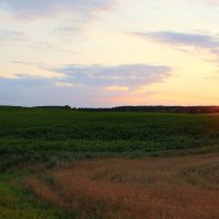 Белорусское поле на закате :: Veronika Gug