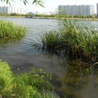 Городской пейзаж. :: Oleg4618 Шутченко