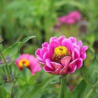Мамины цветы :: Елена Бушуева