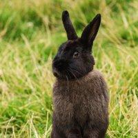 Кролик :: Александр Лядов