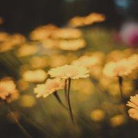 Поляна цветков :: Sergei Babenko