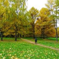 Дорожка в осень. :: Александр Атаулин