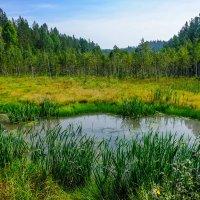 Лесное болотце. :: Rafael