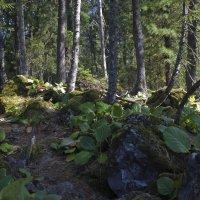 Лес на Заливе Камней :: @ fotovichka