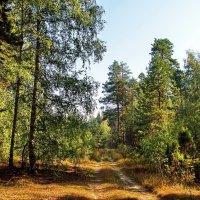 В деревьях с грустью остывают соки... :: Лесо-Вед (Баранов)