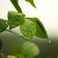 после дождя :: Светлана Т