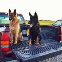 Собаки :: Arman S