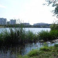 Природа в городе. :: Oleg4618 Шутченко
