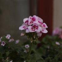 Цветочный хоровод-507. :: Руслан Грицунь