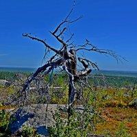 гора Воттоваара :: Александр Шихин