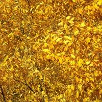 Все золото осени :: Валерий Талашов