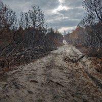 После лесного пожара :: Павел Кухоренко