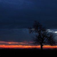 Sunset :: Svetlana Baglai