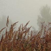 Утренняя туманная трава. :: Владимир Гилясев
