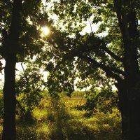 Рассвет в лесу :: Антон Северовъ