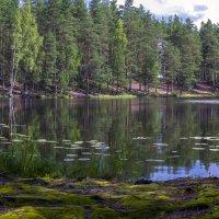 Лесное озеро :: Valeriy Piterskiy