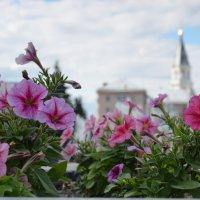 Соборная площадь в Житомире :: Ростислав