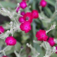 Цветочный хоровод-511. :: Руслан Грицунь