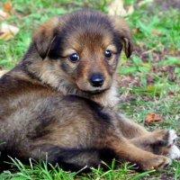 щенок у ног :: Александр Прокудин