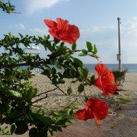 Цветы на пляже. :: Чария Зоя