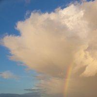 после дождя :: liudmila drake