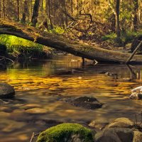Утро горного ручья.. :: Виктор Выдрин